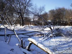 Поломанные деревья возмутили горожан